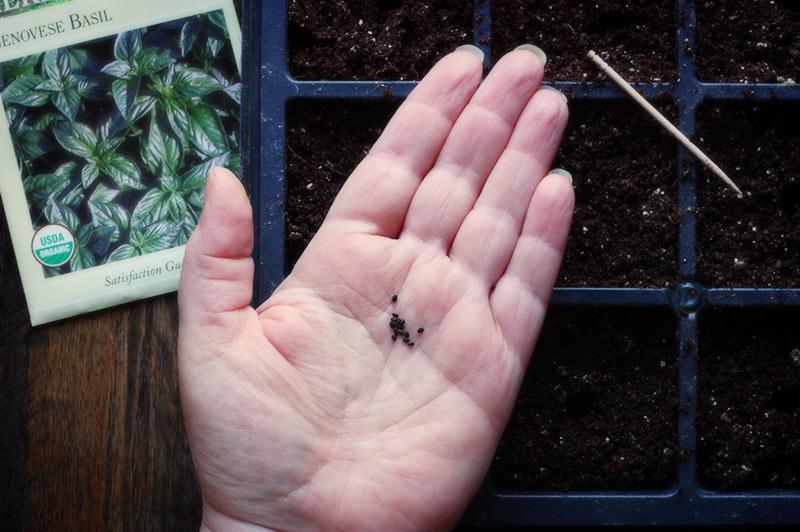 first-seeds-1-022313