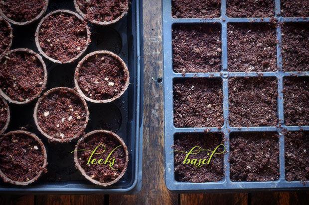 first-seeds-2-022313