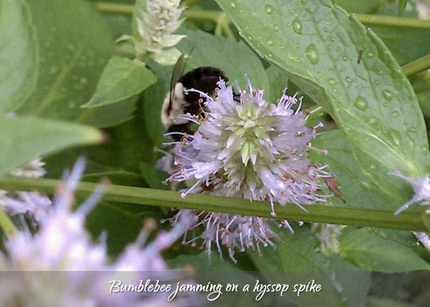 honey-3-020313