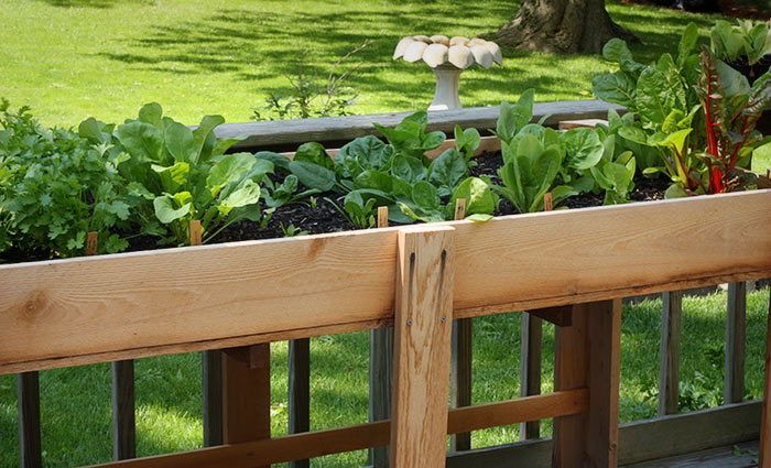 Grow a Pantry Vegetable Garden This Year | SoupAddict.com